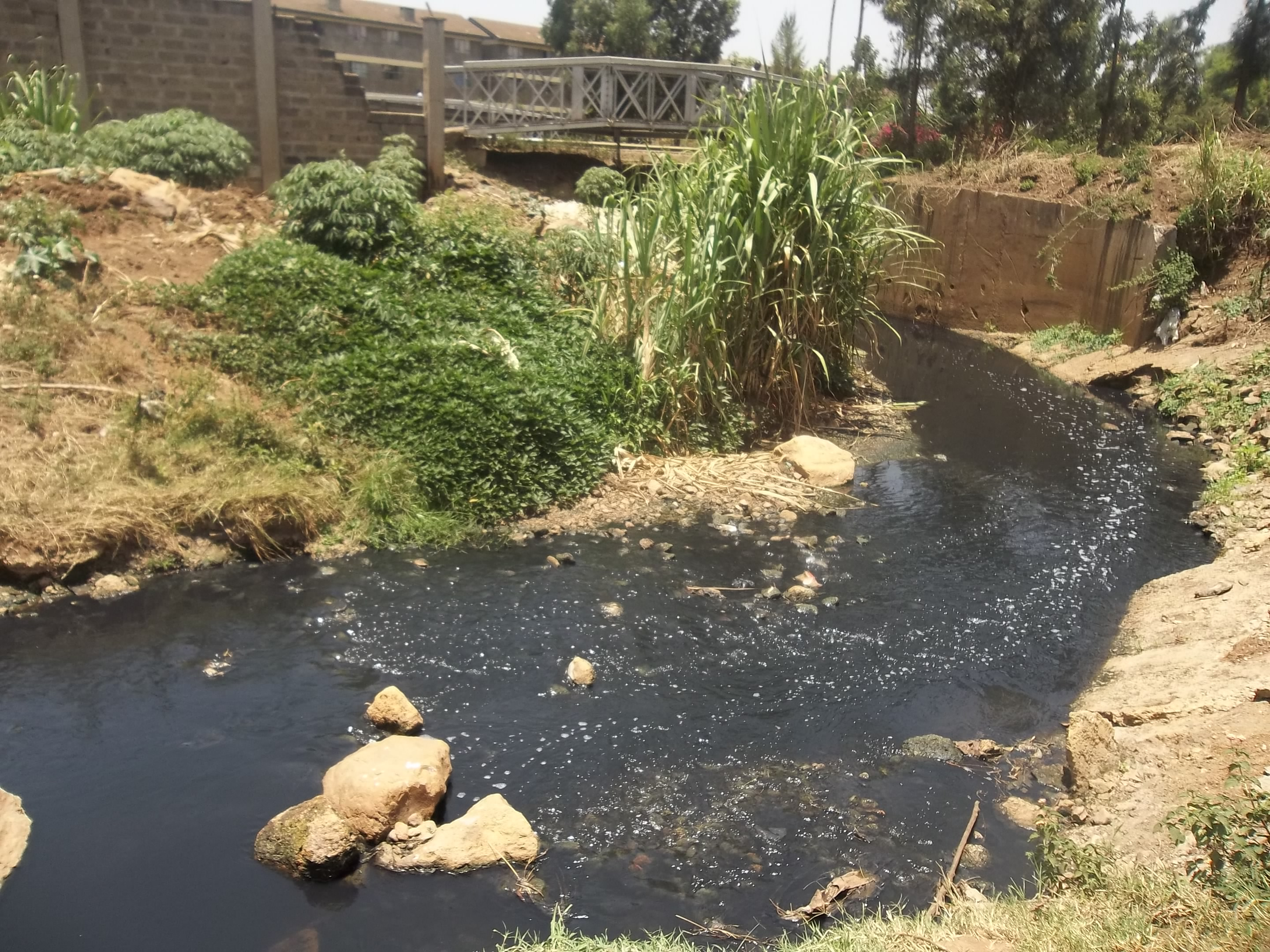 A section of Nairobi River. Bamboo can be used to rehabilitate this and others polluted rivers in the country. [Photo: tunza.eco-generation.org]
